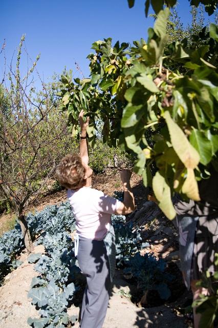 Lia à la recherche de figues fraîches