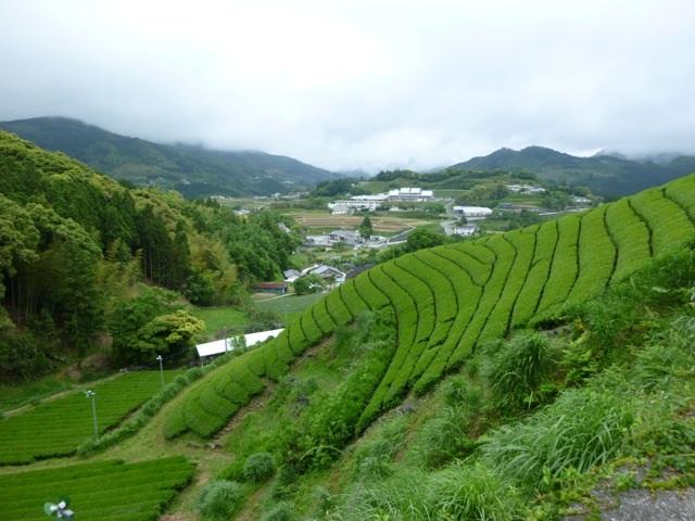 Jardin Miyasaki de la famille Issinen (photo gracieuseté de Hugo/Camellia Sinensis)