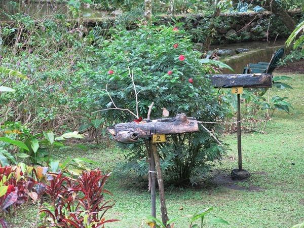 Canopy Lodge observatoire d'oiseaux