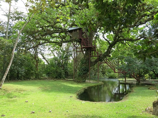 Canopy Lodge piscine naturelle