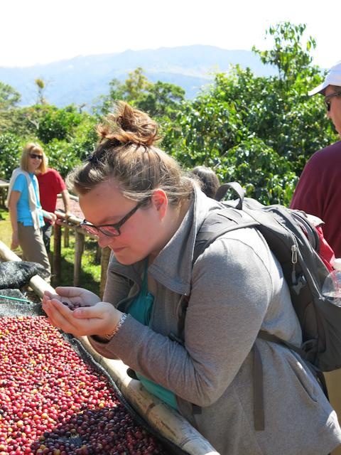 cerises de café Panama Boquete