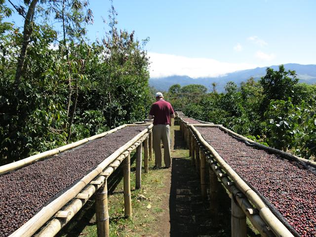 étendoirs café Boquete Panama