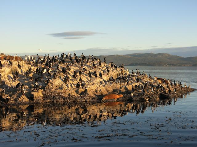 La faune incroyable îles du Canal Beagle Ushuaia