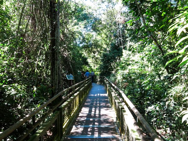 Entouré par la nature dans les sentiers des chutes d'Iguazu en Argentine