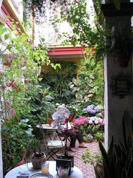 fiesta des patios à Cordoba en Espagne