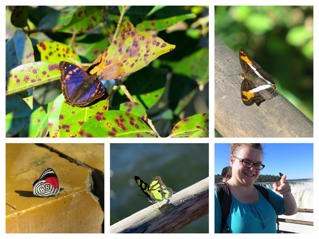 Une foule de papillons aux Chutes d'Iguazu en Argentine