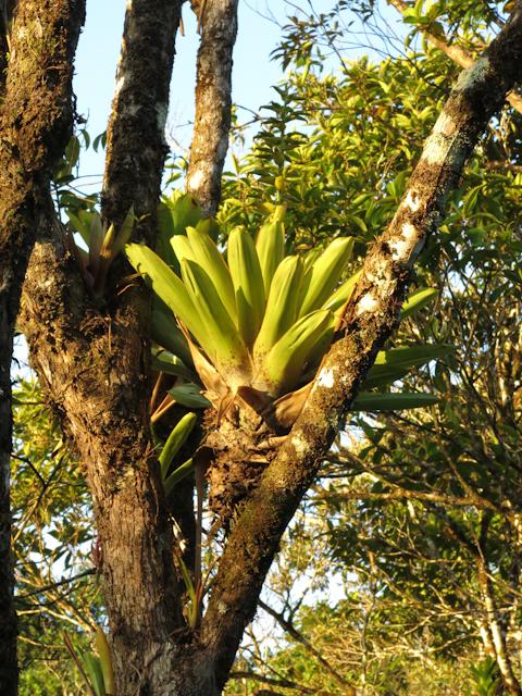 La jungle au lever du jour - Santa Fe, Panama