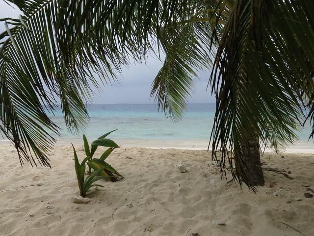 La vue de mon hamac - Isla Iguana, San Blas, Panama