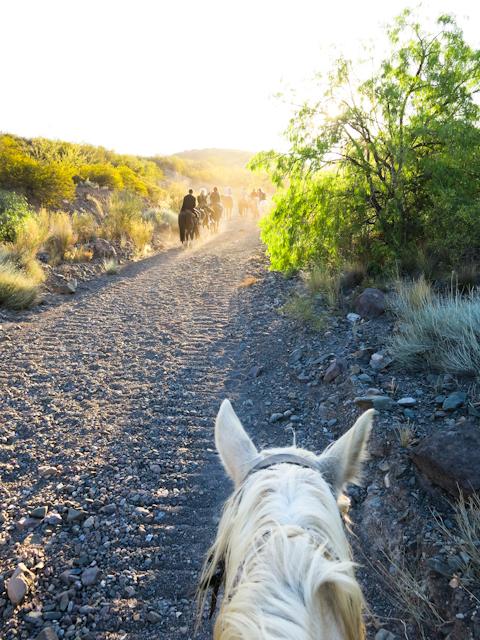 Ma monture qui traîne un peu - Mendoza, Argentine