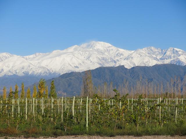Vue sur la région de Lujan de Cuyo du vignoble Ruca Malen - Mendoza, Argentine