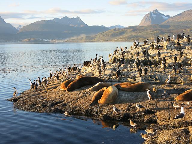 Lions de mer et cormorans - Ushuaia, Argentine