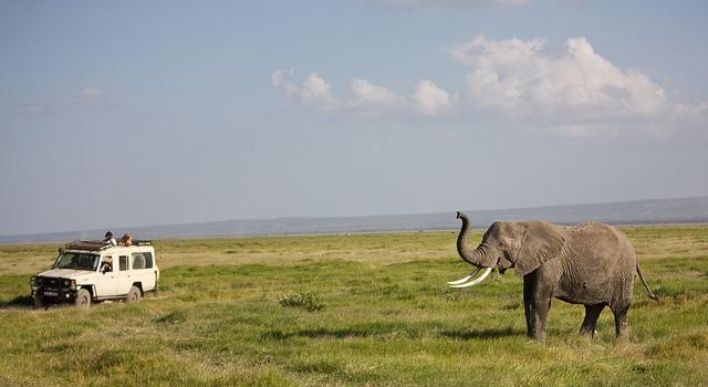 On observe les éléphants - Safari en Afrique