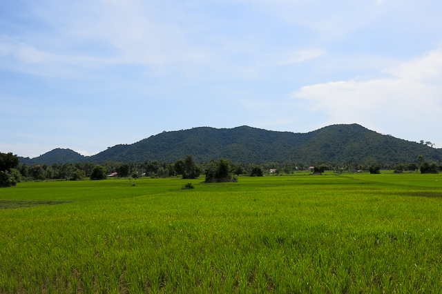 Les rizières du Cambodge