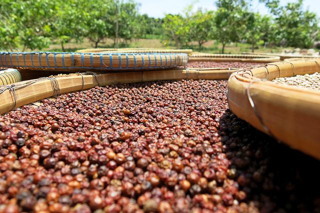 poivre rouge du cambodge
