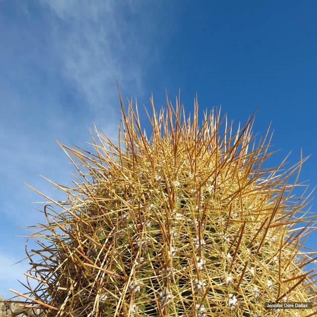 Cactus - Désert de sel - Salar d'Uyuni, Bolivie