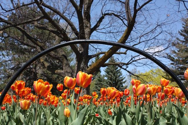 Festival canadien des tulipes - Ottawa, Canada