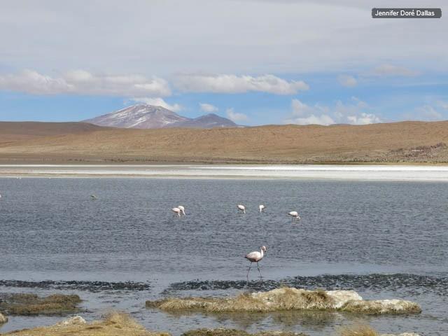 Oiseaux dans la lagune - Désert de sel - Salar d'Uyuni, Bolivie