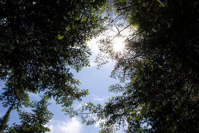 Entre les arbres - L'Auberge Gîte du Mont-Albert, Gaspésie