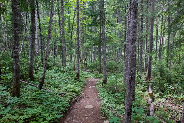Sentier en plein bois - Auberge Gîte du Mont-Albert, Gaspésie