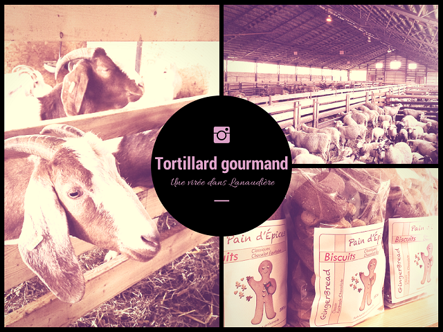 Tortillard gourmand