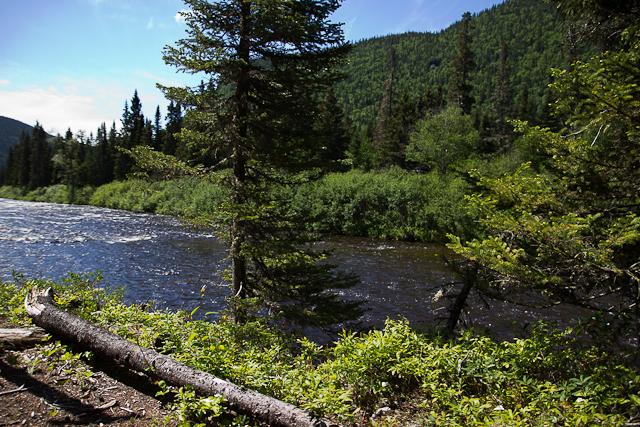 Vue sur la rivière - L'Auberge Gîte du Mont-Albert, Gaspésie