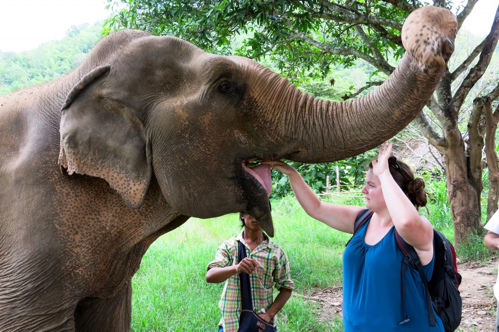 Éléphant Chiang Mai Thailande