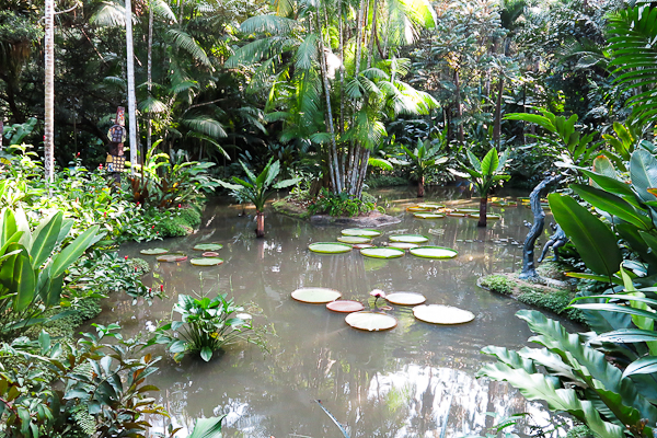Étang au Jardin botanique de Singapour