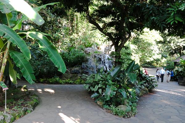Mes sorties gratuites pr f r es singapour moi mes for Jardin botanique singapour