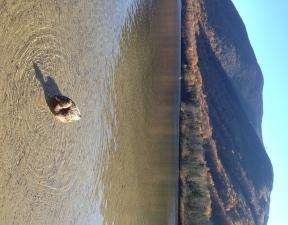 Canard au Lac Echo