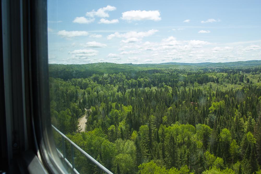 Forêt vue du train pour l'Abitibi-Témiscamingue