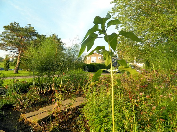 potager auberge & spa west brome
