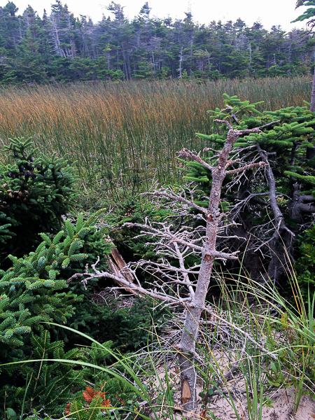 Bois - Pointe-de-l'Est - Îles de la Madeleine