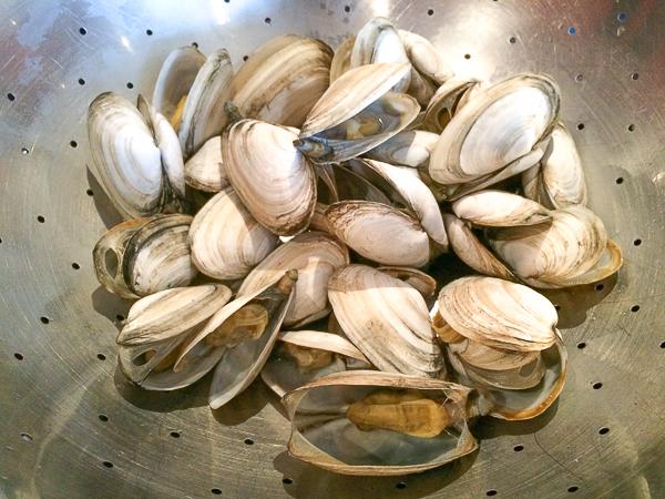 Coques cuites - Pointe-de-l'Est - Îles de la Madeleine
