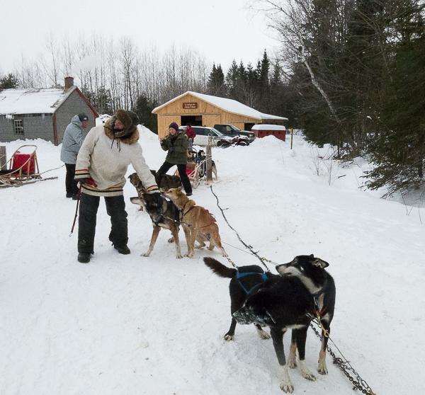 Traîneau à chiens - Mauricie - Le Baluchon (14 sur 18)