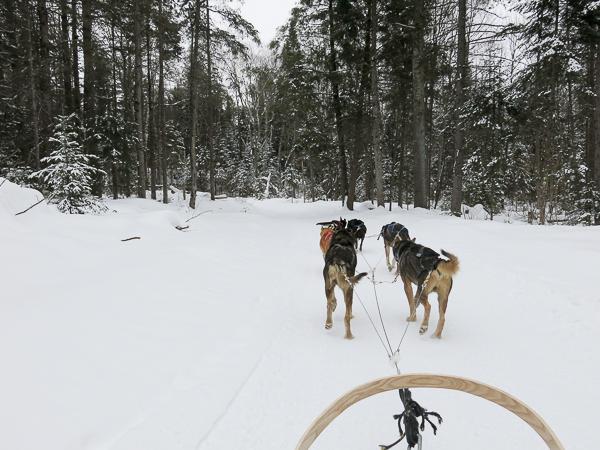 Traîneau à chiens - Mauricie - Le Baluchon (2 sur 18)