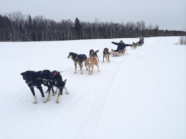 Traîneau à chiens - Mauricie - Le Baluchon (7 sur 18)