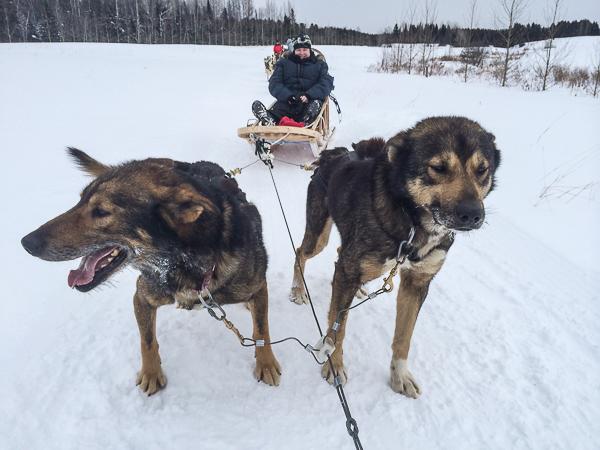 Traîneau à chiens - Mauricie - Le Baluchon (8 sur 18)