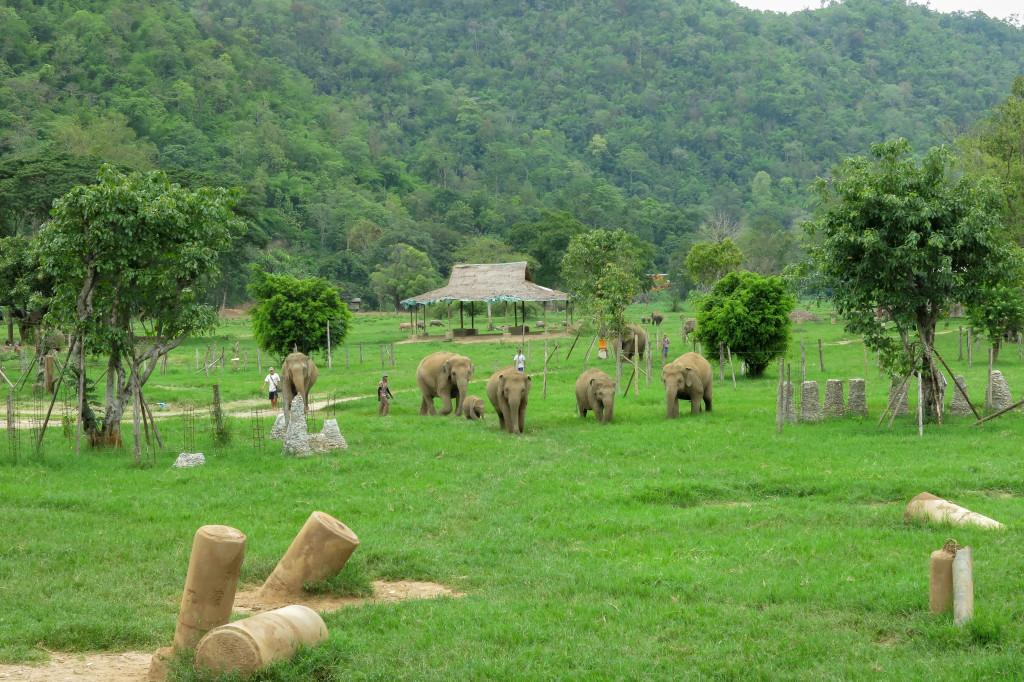 Éléphants libres au Elephant Nature Park