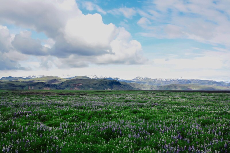 Islande Annie Picard