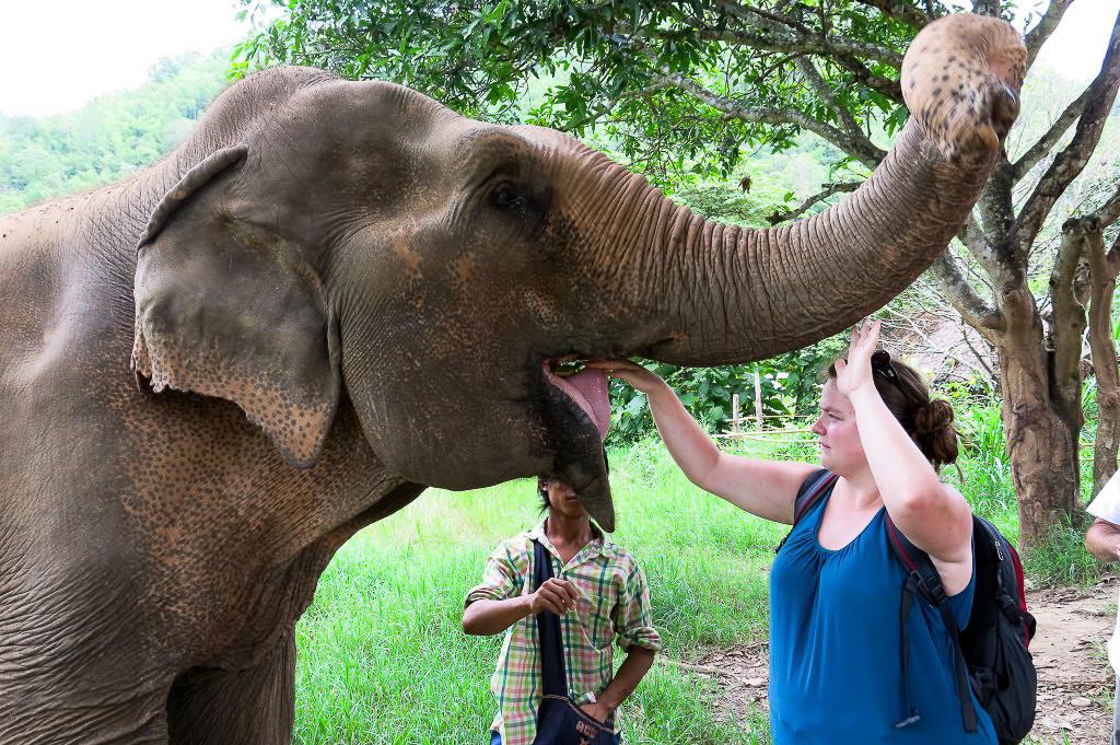 Jennifer qui nourrit un éléphant en Thaïlande