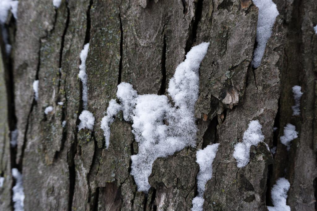 Neige sur l'arbre - Villeray - Montréal, Québec, Canada-9