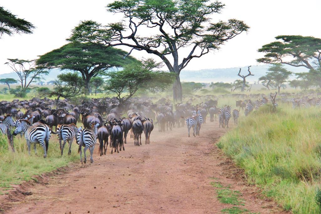 Maman Globe-Trotteuse en Tanzanie