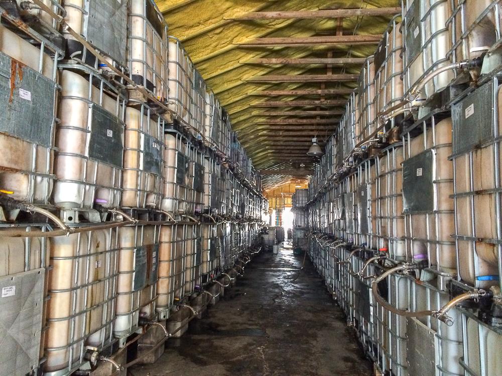 Des litres et des litres de cidre - La Face cachee de la pomme - Monteregie