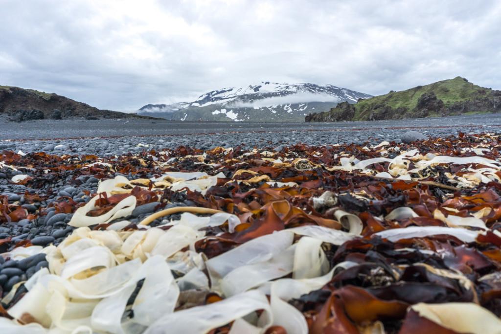 Djupalonssandur - Plage - Islande