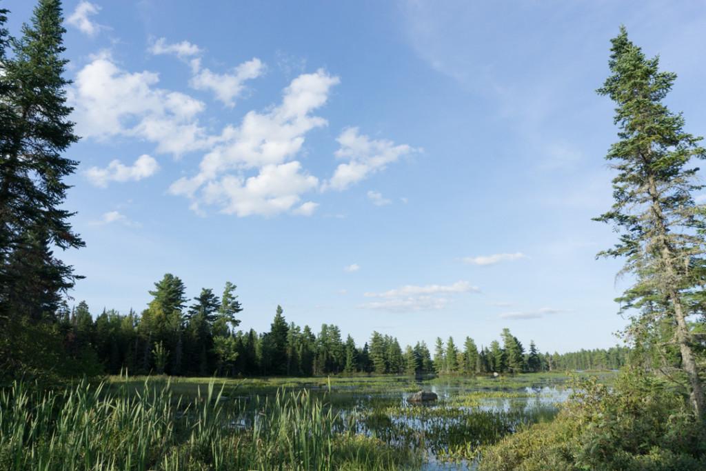 Marecage et lac a la Barbue