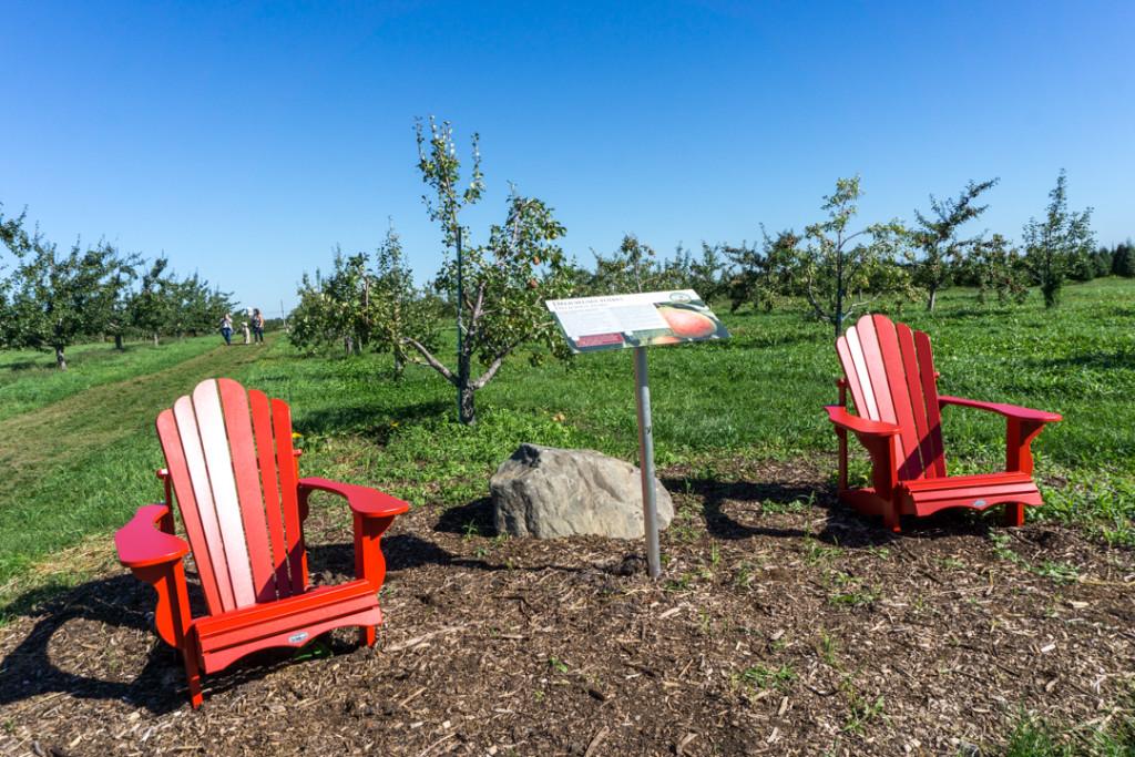 Chaises Adirondack rouges le long des sentiers du Verger Champêtre