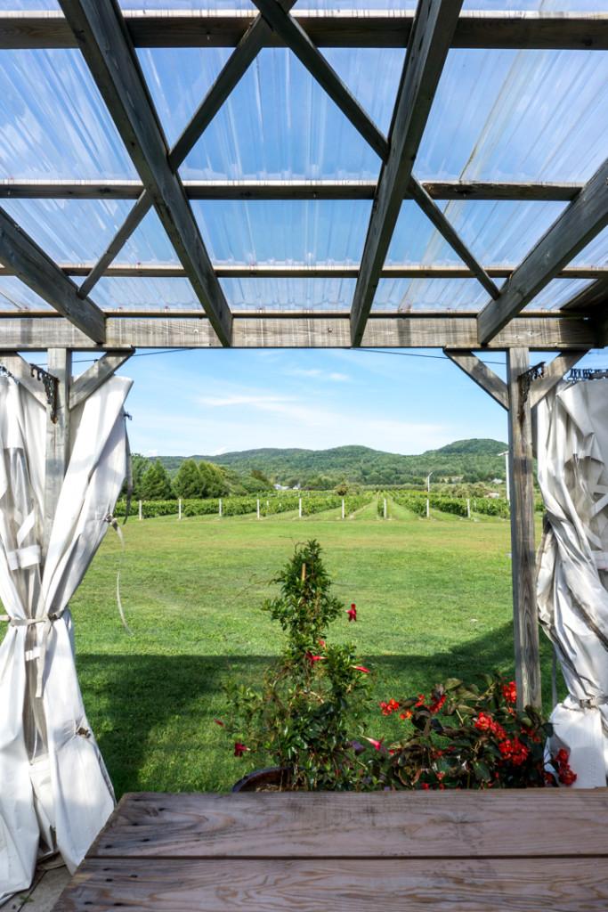 Vue spectaculaire sur le vignoble Domaine De Lavoie