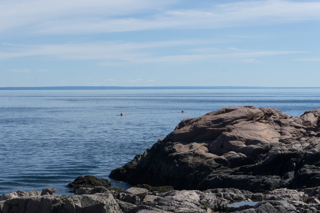 Baleines près du rivage à Tadoussac