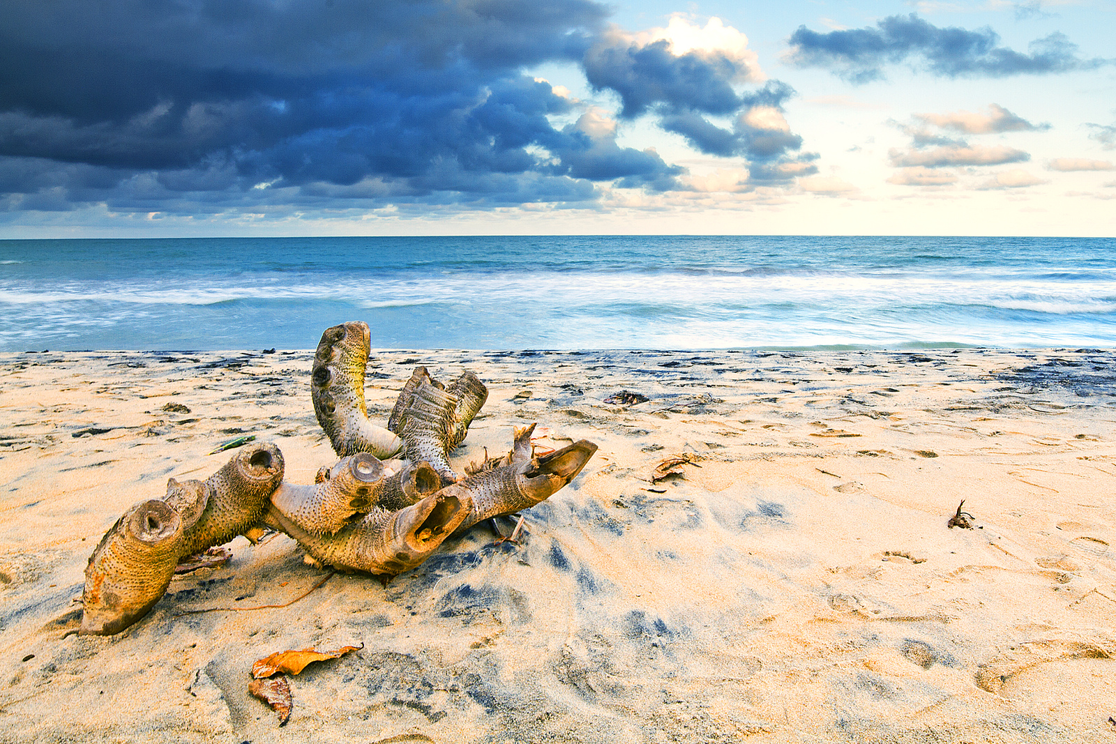 Sur la plage de Mahanoro Madagascar - Flickr Teza Harinaivo Ramiandris