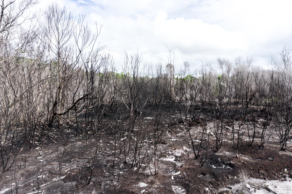 Forêt dévastée et brûlée par les feux de forêts à Madagascar